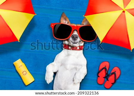 dog lying on towel under shade of umbrella relaxing and chilling out in the summer vacation taking a selfie  - stock photo