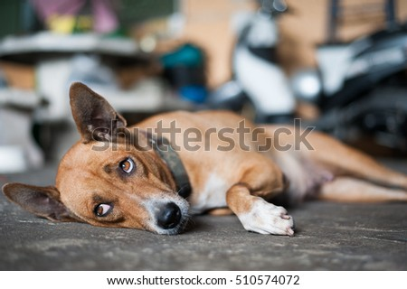 Dog lying wait someone