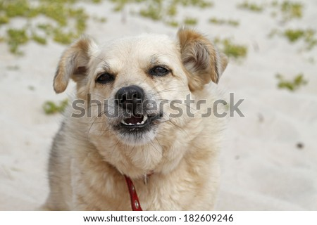 dog making a face