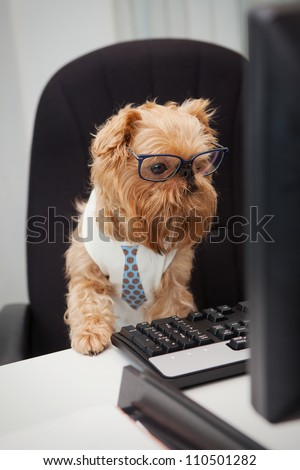 Dog Manager works for a computer, looking at the monitor - stock photo