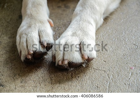 dog Nail / foot dog - stock photo