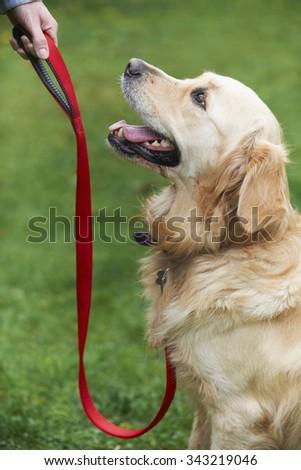 Dog Obedience Training - stock photo