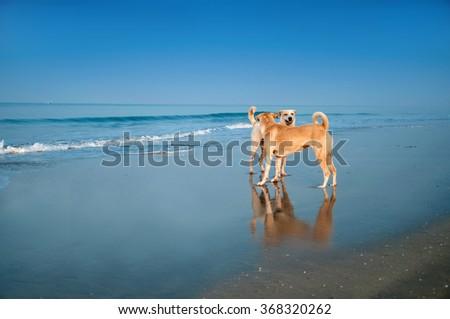 Dog of the sea - stock photo