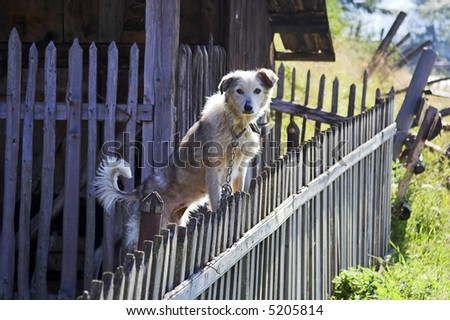dog on a fence