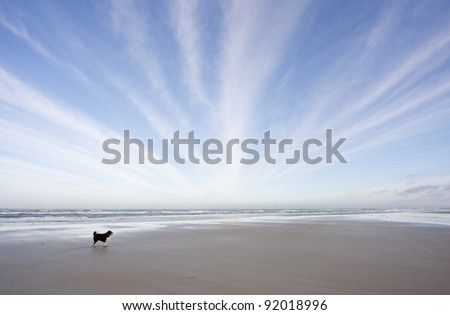 Dog on a vast beach, lines of clouds in the sky - stock photo