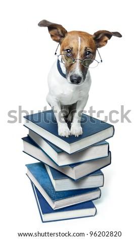 dog on books - stock photo
