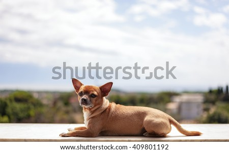 Dog on bricks wall with a beautiful landscape - stock photo