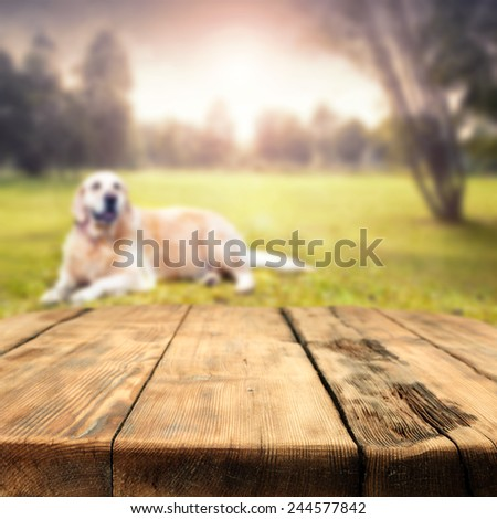 dog on grass in park and wooden table of space for you  - stock photo