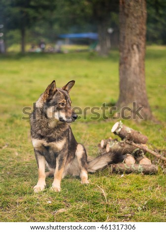 Dog on green grass, outdoors.