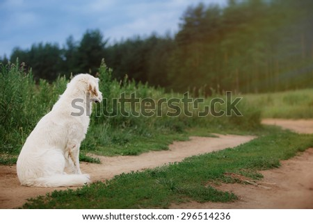 Dog on summer nature beautiful  on nature