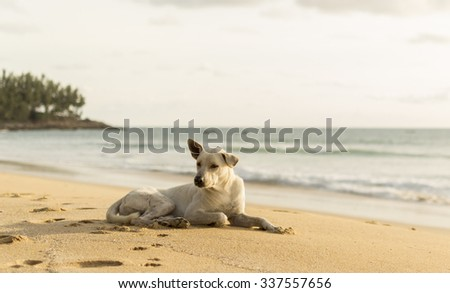 Dog on the golden sand