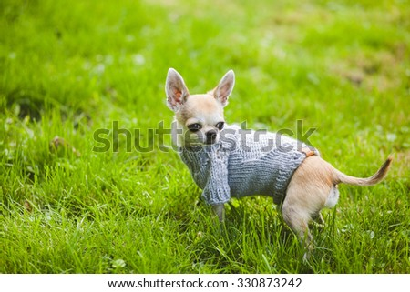 Dog on the grass - stock photo