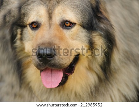 dog on the green grass - stock photo