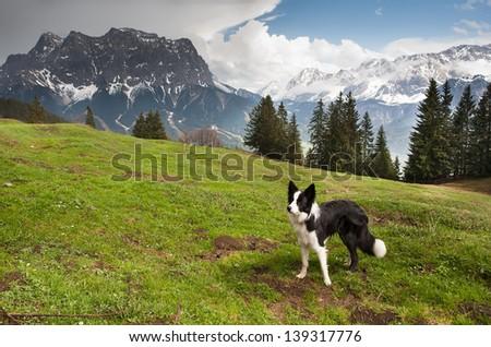 Dog on the mountain pass, Dolomites mountains - stock photo