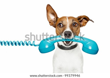dog on the phone and looking th the side - stock photo