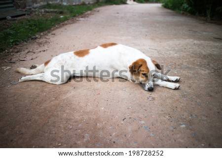Dog on the road - stock photo