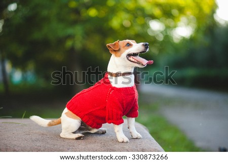 Dog on the street - stock photo