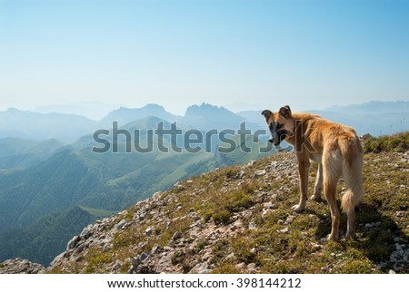 Dog on the top of Big Tkhach mountain, view to Acheshbok mountain, Russia - stock photo