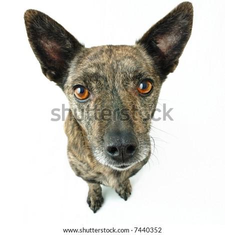 dog on white background - stock photo