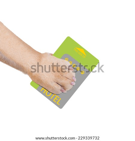 dog or pet holding hotel key card  in a pet friendly home or hotel, isolated on white background - stock photo