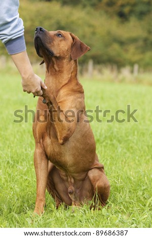 dog paw and human hand shaking as a sign for  friendship - stock photo