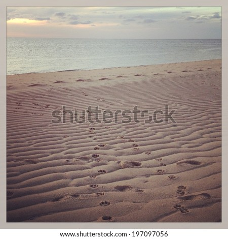 Dog paw prints in the sand at a beach in Provincetown, Massachusetts with black and white Instagram effect filter. - stock photo