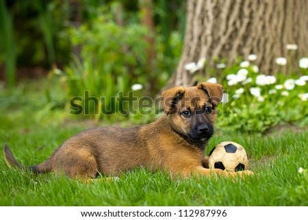 Dog playing - stock photo