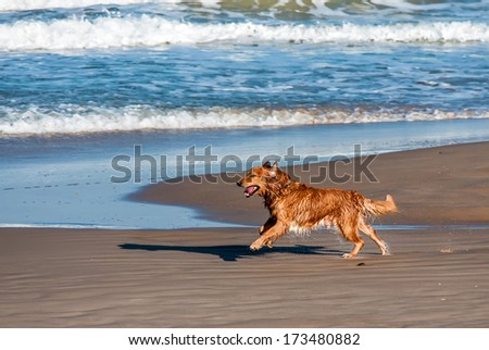 dog playing and splashing in water at the beach - stock photo