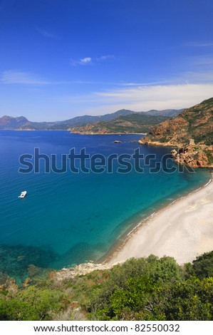 Dog playing at the sea at the coastline in Corsica.Pallombaggio beach. - stock photo