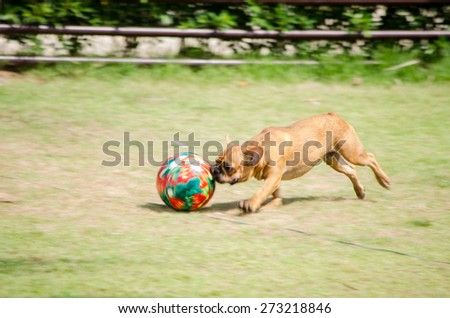 dog playing ball in the grass, panning camera, soft focus and blur  - stock photo