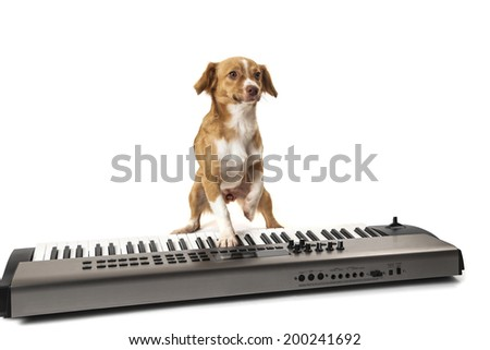 Dog playing music on piano isolated over white background - stock photo