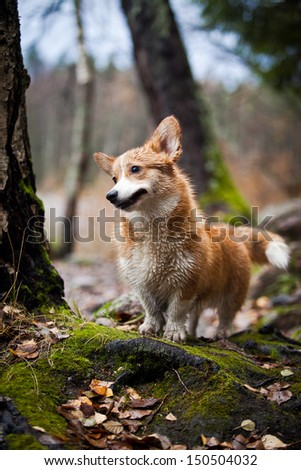 dog playing outdoors portrait - stock photo