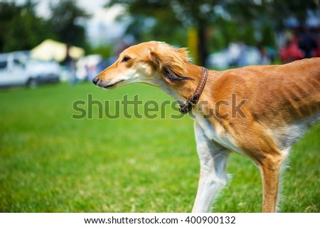 Dog playing outside - stock photo