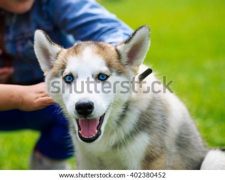 Dog playing outside smiles - stock photo