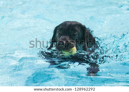 Dog plays in the swimming pool
