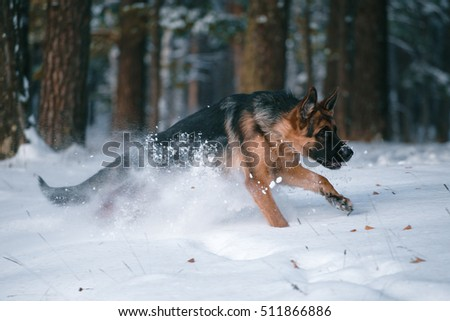 Dog plays in the winter forest