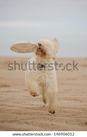 Dog Portrait  - stock photo