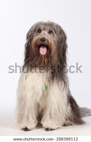 Dog Portrait - stock photo
