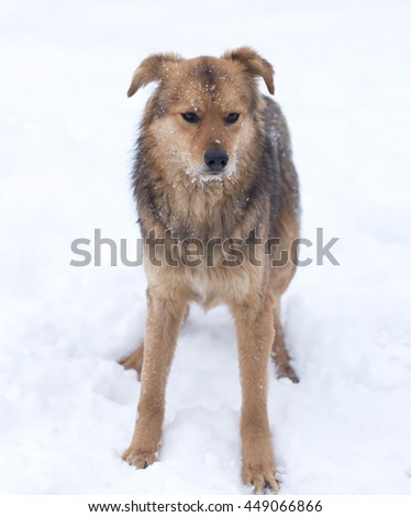 dog portrait outdoors in winter