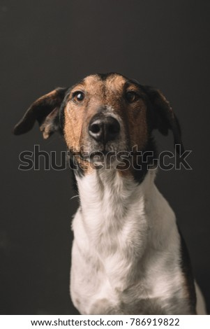 Dog portrait. Terrier dog studio shot.