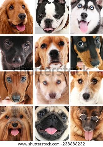 Dog portraits collage - stock photo