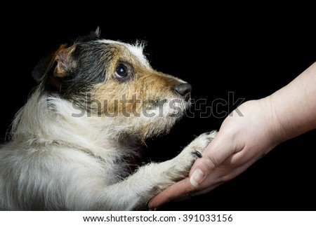 Dog pressing his paw against a woman hand - stock photo