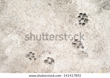 Dog prints on cement floor background - stock photo