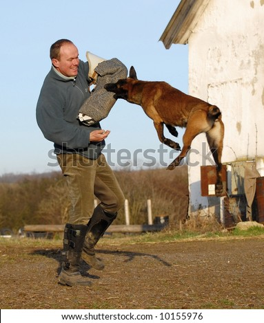 dog protection,police,military trainnig - stock photo