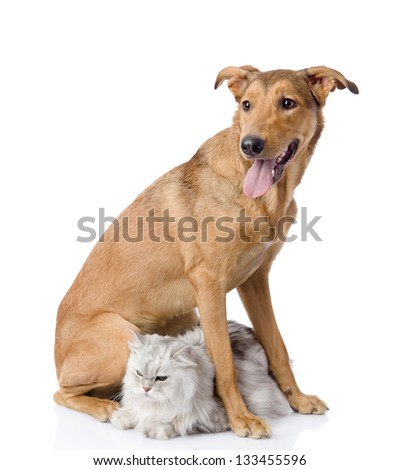 dog protects a cat.  looking away. isolated on white background
