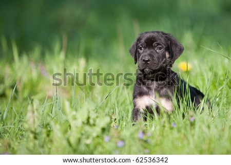 Dog puppies in a meadow - stock photo