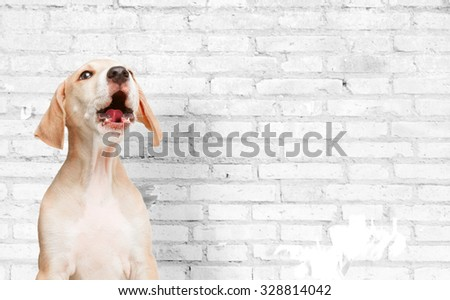 dog puppy - stock photo
