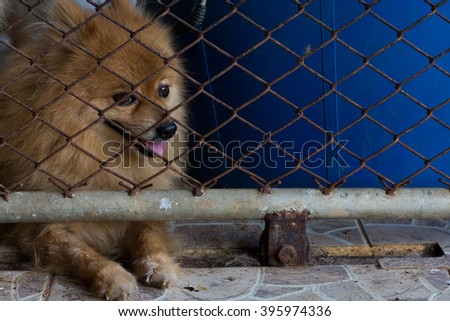 dog , puppy dog , Puppies in the pen