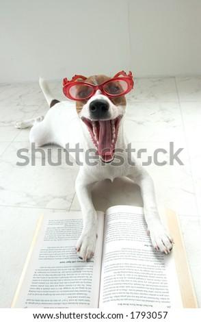 dog reading - stock photo