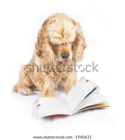 Dog reading book, with the tip of tongue out - stock photo